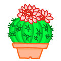 Flowering cactus on white background Royalty Free Stock Images