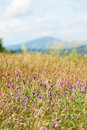 Flowering clover meadow hills background Stock Photography