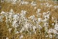 Flowering cotton grass on a bright summer day Royalty Free Stock Images
