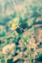 Flowering grass vintage style color light Royalty Free Stock Image