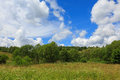 Flowering grassy meadow under blue cloudy sky Royalty Free Stock Photo