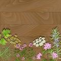 Flowering herbs on wooden background.