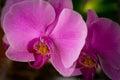 Flowering house plants, indoor plants