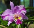 Flowering orchids in Botanical Garden