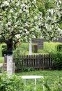 Flowering ornamental apple tree in ornamental garden Royalty Free Stock Photo