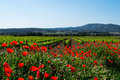 A flowering poppy field with vineyard in a background Royalty Free Stock Photo