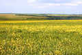 Flowering rapeseed and barley field Stock Photos