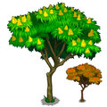 Flowering tree with fruits and autumn version
