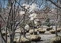 Flowering tree in nursery garden Royalty Free Stock Photography