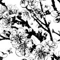 Flowering tree seamless texture with branches of a blossoming and the bees black and white Stock Photography