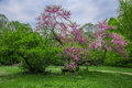 Flowering trees of the park talon with hdr parco often just chiusa italy photo executed technique spring season Royalty Free Stock Image