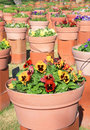 Flowerpot Royalty Free Stock Photo