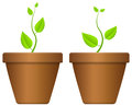 Flowerpot and plant with on a white background Royalty Free Stock Image