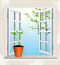 Flowerpot on window sill Stock Photos