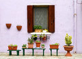 Flowerpots outside a lilac building. Stock Photography