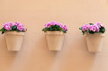Flowerpots with pink flowers hanging on a house wall Stock Photography
