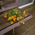 Flowers abandoned on a bench Royalty Free Stock Photo