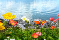Flowers against mountains and lake Geneva from the Embankment in Montreux Stock Images