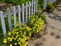 Flowers along the sidewalk Royalty Free Stock Image