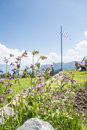 Flowers in alps the on a mountain bavaria germany Stock Photography