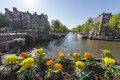 Flowers in Amsterdam Royalty Free Stock Photo