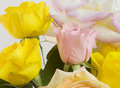 Flowers art closeup yellow pink roses floral background Stock Image