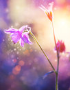 Flowers art design floral abstract purple soft focus Stock Photography