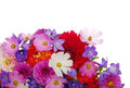 Flowers background of the beautiful Royalty Free Stock Photo