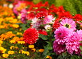 Flowers background of different kinds of Royalty Free Stock Image