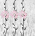 Flowers background repetition chicory monotonous on a gray Stock Photography