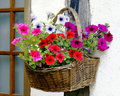 Flowers basket Stock Images