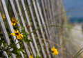 Flowers by the beach fence Royalty Free Stock Photo