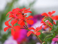 Flowers beautiful and colorful and natur Stock Photos