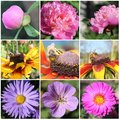 Flowers and bees collage colourful of various kinds of Royalty Free Stock Photo