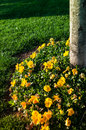 Flowers beneath a tree on park under the setting sun Stock Photography
