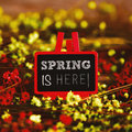Flowers and blackboard with the text spring is here a in an easel written in it surrounded by many red yellow small Stock Photos