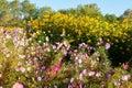 The flowers in bloom in the garden