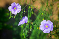 Flowers blooming in the garden small purple Stock Images