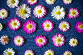 Flowers on blue fabric with a pattern, nature background, wallpaper Royalty Free Stock Photo