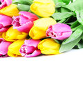 Flowers bouquet of tulips on a white background Royalty Free Stock Photo