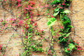 Flower flowers red brick wall Royalty Free Stock Photo