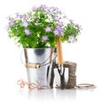 Flowers in bucket with garden tools Royalty Free Stock Images