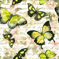 Flowers, butterflies, hand written text note. Watercolor. Vintage seamless pattern Royalty Free Stock Photo