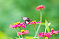 Flowers with butterflies at thailand Stock Images