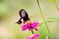 Flowers with butterflies at thailand Royalty Free Stock Image