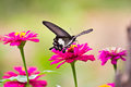 Flowers with butterflies at thailand Royalty Free Stock Images