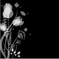 Flowers and butterflies of white color on a black background Royalty Free Stock Photos