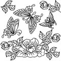 Flowers and butterfly butterflies black white drawing Royalty Free Stock Photography