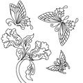Flowers and butterfly butterflies black white drawing Stock Images