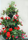 Flowers in cache-pot Stock Photography